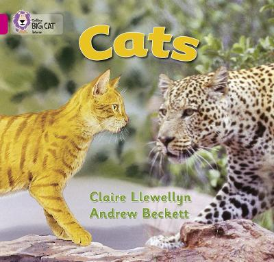 Cats Band 01b/Pink B by Claire Llewellyn