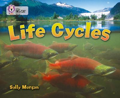 Life Cycles Band 16/Sapphire by Sally Morgan