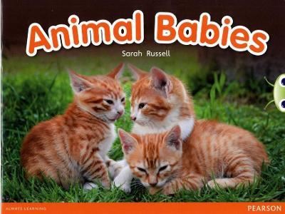 Bug Club Red B (KS1) Animal Babies by Sarah Russell