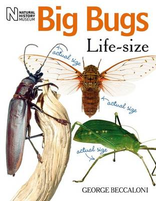 Big Bugs Life-Size by George Beccaloni
