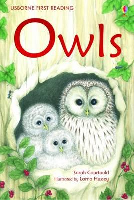 Owls by Sarah Courtauld