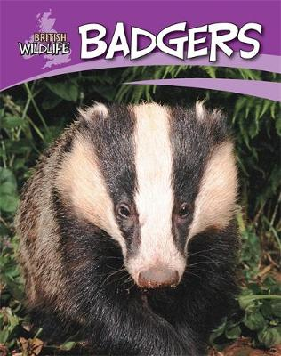 British Wildlife: Badgers by Sally Morgan