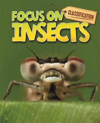 Classification: Focus on: Insects by Stephen Savage