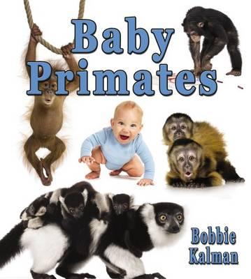 Baby Primates by Bobbie Kalman