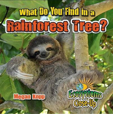 What Do You Find in a Rainforest Tree? by Megan Kopp
