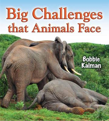 Big Challenges That Animals Face by Bobbie Kalman