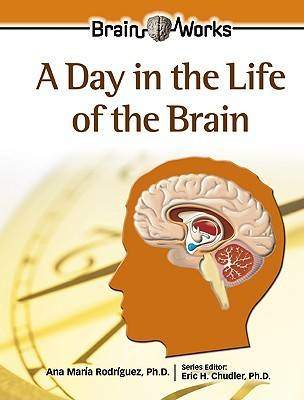 A Day in the Life of the Brain by Ana Maria Rodriguez