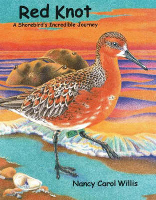 Red Knot A Shorebird's Incredible Journey by Nancy Carol Willis