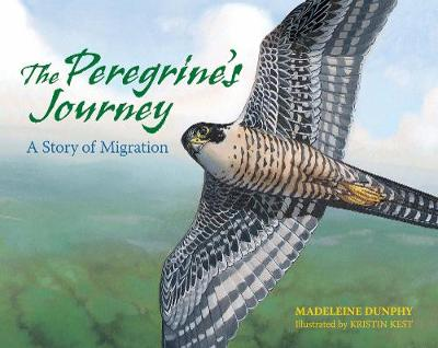 The Peregrine's Journey A Story of Migration by Madeleine Dunphy