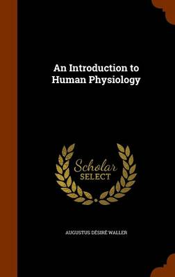 An Introduction to Human Physiology by Augustus Desire Waller