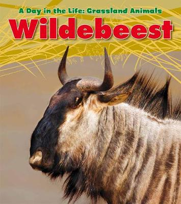 Wildebeest by Louise Spilsbury