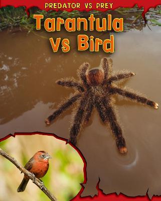 Tarantula vs Bird by Mary Meinking