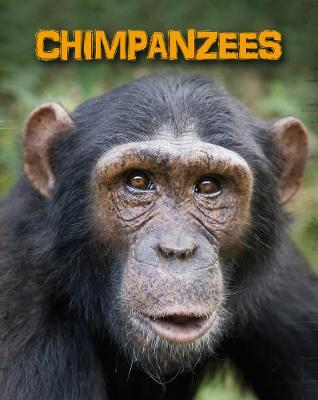 Chimpanzees by Heidi Moore