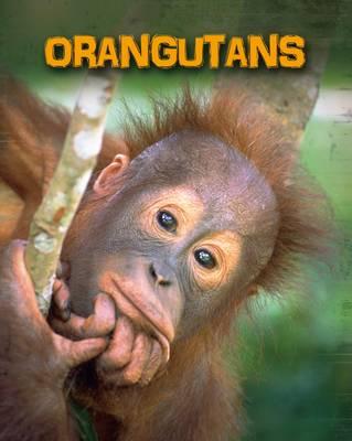Orangutans by Buffy Silverman