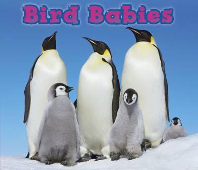 Bird Babies by Catherine Veitch