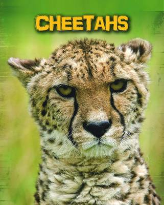 Cheetahs by Charlotte Guillain