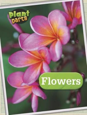 Plant Parts Pack A of 4 by Melanie Waldron