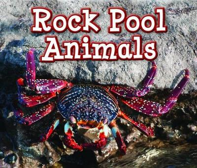 Rock Pool Animals by Sian Smith