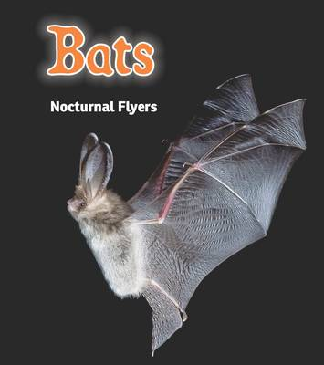 Bats Nocturnal Flyers by Rebecca Rissman