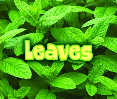 All About Leaves by Claire Throp