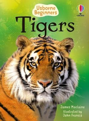 Beginners Tigers by James Maclaine
