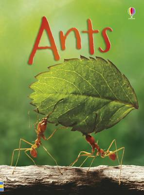 Beginners Ants by Lucy Bowman