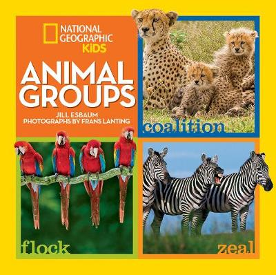 Animal Groups by Jill Esbaum