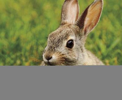 Rabbits by G.G. Lake