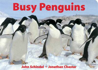 Busy Penguins by John Schindel, Jonathan Chester