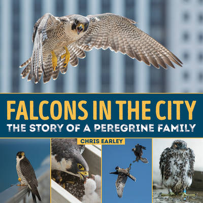 Falcons in the City The Story of a Peregrine Family by Chris Earley, Luke Massey