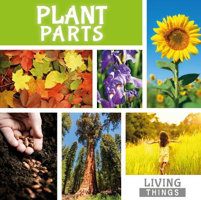 Plant Parts by Steffi Cavell-Clarke