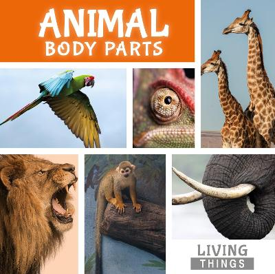 Animal Body Parts by Steffi Cavell-Clarke