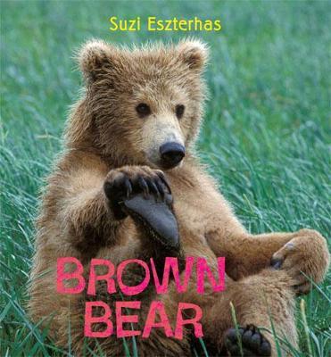 Brown Bear by Suzi Eszterhas