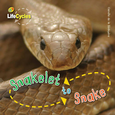 Life Cycles: Snakelet to Snake by Camilla De la Bedoyere