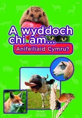 Cyfres a Wyddoch Chi: A Wyddoch Chi am Anifeiliaid Cymru? by Elin Meek