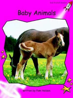 Baby Animals by Pam Holden