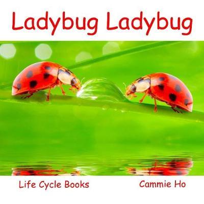 Ladybug Ladybug by Cammie Ho