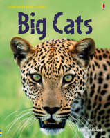 Big Cats by Jonathan Shiekh-Miller