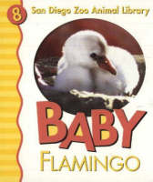 Baby Flamingo by Patricia A. Pingry