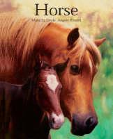 Horse by Malachy Doyle