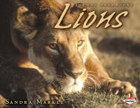 Lions by Sandra Markle