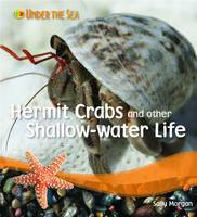 Hermit Crabs and Other Shallow Water Life by Sally Morgan