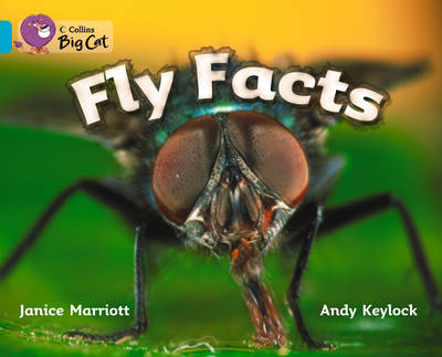 Fly Facts Workbook by
