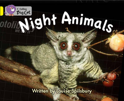 Night Animals Workbook by