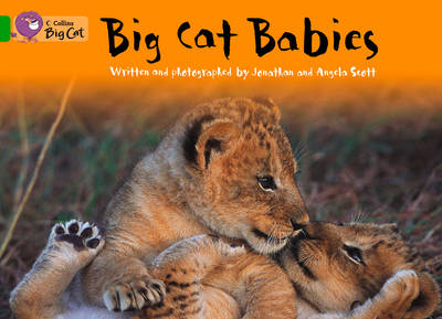 Big Cat Babies Workbook by
