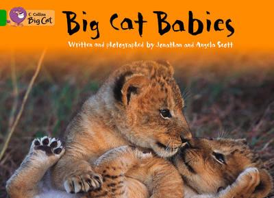 Big Cat Babies Workbook by