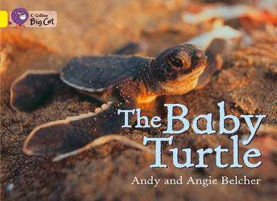 Collins Big Cat The Baby Turtle: Band 03/Yellow by Andy Belcher, Angie Belcher