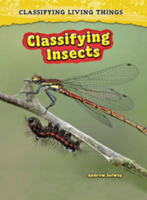 Classifying Insects by Richard Spilsbury, Louise Spilsbury, Andrew Solway