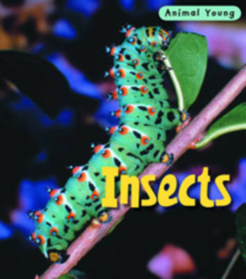 Insects by Rod Theodorou