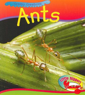 Ant by Sue Barraclough